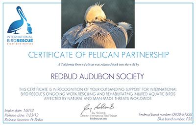 Pelican Partner -Redbud Audubon