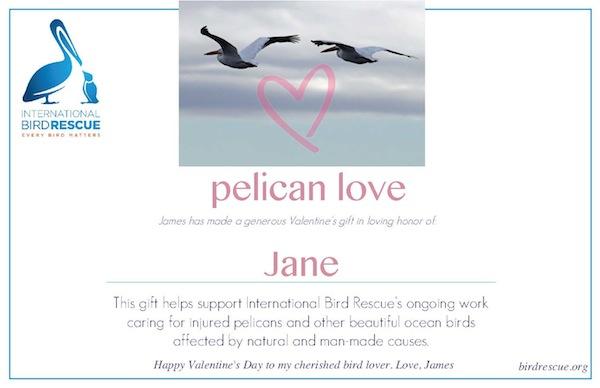 IBR-Pelican Love2