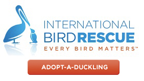 IBR-logo-w-donation