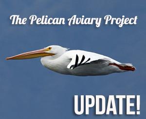 Pelican,-White-02-M