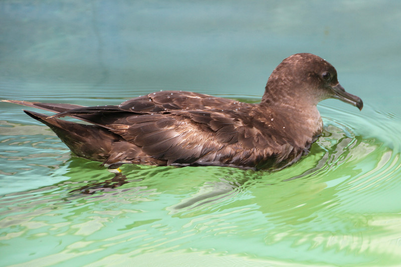 Shearwater IMG_5826-L