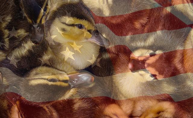 duckling_300dpi-L