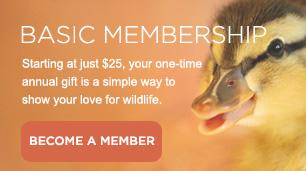 Basic-Membership 3