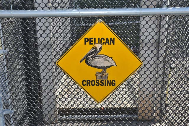 Pelican Aviary Celebration at San Francisco Bay Center on September 7, 2013