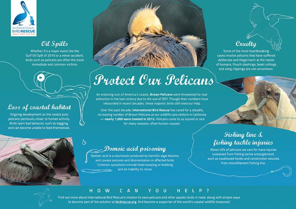 Protect Our Pelicans