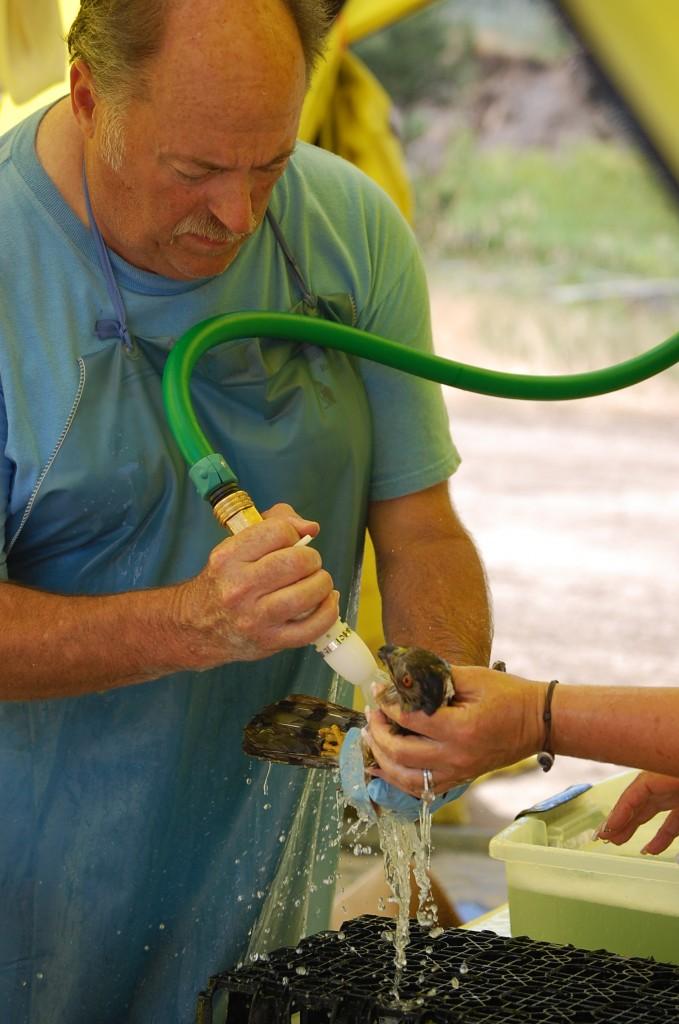 Montana 43 7.21.11 Hayden Nevill Jay rinsing c hawk