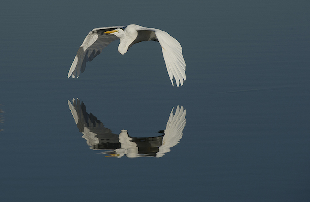Snowy Egret 2, Karen Schuenemann