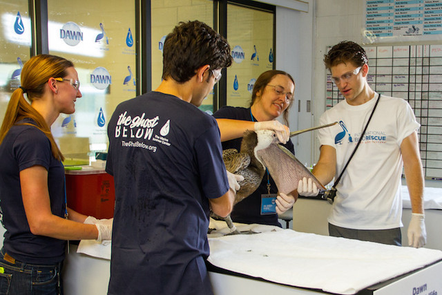 Examining a patient