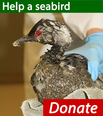 Button donate to save seabirds
