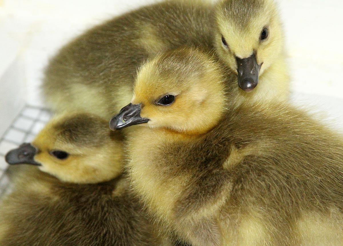 International Bird Rescue – Every Bird Matters» Blog Archive » Your ...