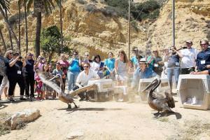 Pelican Release in San Pedro, CA.