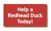 help-a-redhead-duck-button