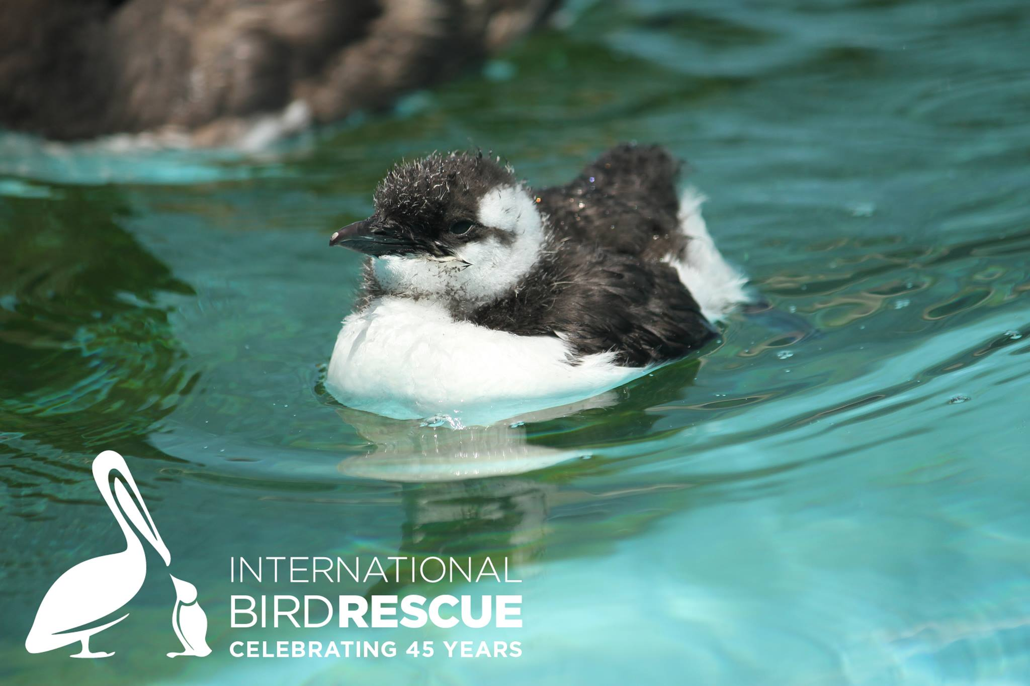 international bird rescue u2013 every bird matters