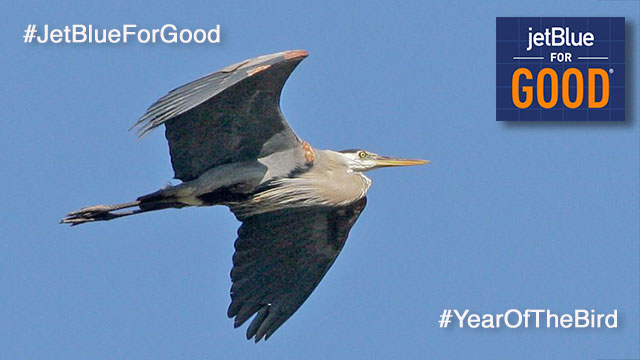 Hop Aboard JetBlue For Good And Vote To Help Birds