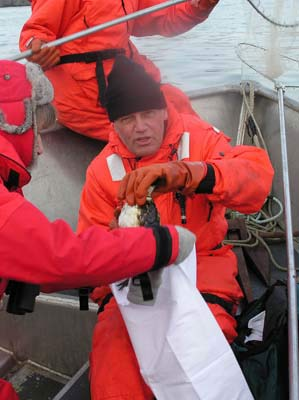 Photo of Curt Clumpner with captured Common Murre at Selendang Ayu response by International Bird Rescue
