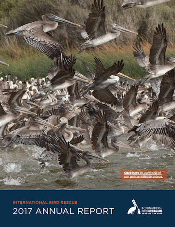 Download 2017 Annual Report in PDF from International Bird Rescue