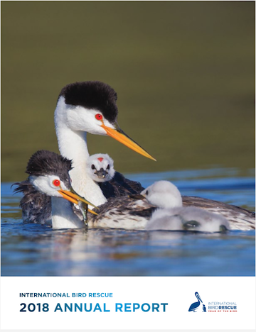 Download 2018 Annual Report in PDF from International Bird Rescue