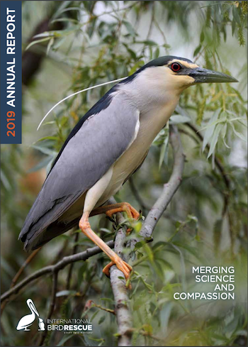 Download 2019 Annual Report in PDF from International Bird Rescue